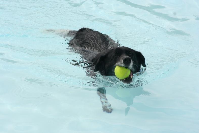 Dixie Swim